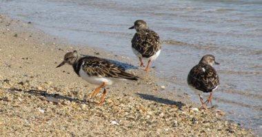 صور.. الطيور البحرية تنتشر على شواطئ البحر الأحمر بعد توقف النشاط بسبب كورونا