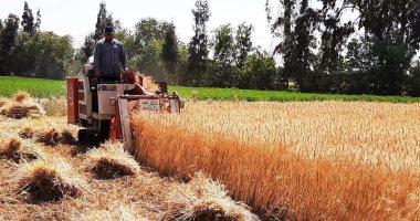 تونس تطرح مناقصة لشراء 176 ألف طن من قمح الطحين