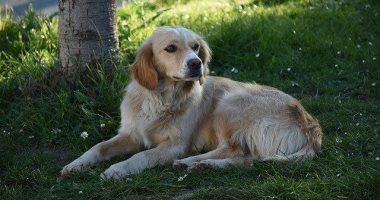 درس فى الوفاء.. كلب ينتظر صاحبه المريض 5 أيام أمام باب المستشفى.. صور