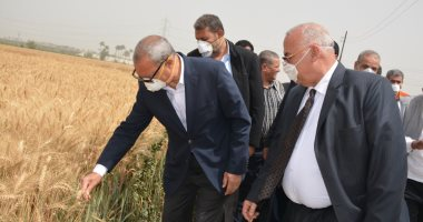 زراعة القليوبية: حصاد 45 ألف و513 فدانا من القمح وتوريد 127 ألف طن للصوامع