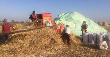 التموين: استلام 2 مليون و900 ألف طن قمح من المزارعين حتى الآن