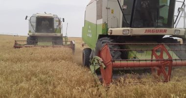 3 شائعات نفتهم وزارة الزراعة فى أسبوع أبرزهم تقليص رقعة زراعة القمح