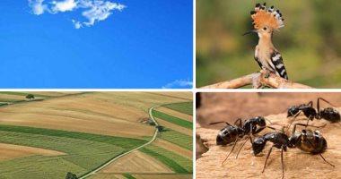 النملة والهدهد والسماء والأرض.. هل الطيور والحشرات والجماد تسمع