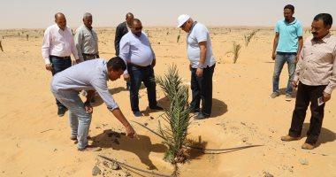 محافظ الوادى الجديد يتفقد مشروع مزرعة نخيل على مساحة 350 فدانا بالخارجة