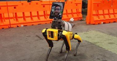 روبوت يحاكى الكلاب يعمل مع أطباء بوسطن لعلاج مرضى كورونا.. صور