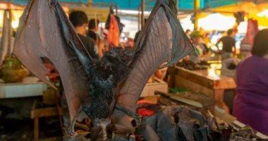 The Sun البريطانية: الثعابين والخفافيش ما زالت تباع فى أندونيسيا والصين