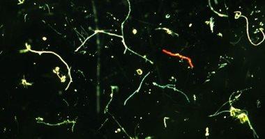 العثور لأول مرة على جزيئات البلاستيك فى دماء حيوانات المزارع