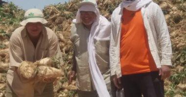 الزراعة: استمرار حصاد البنجر بمشروع المنيا وتوريد 10000 طن لـ3 شركات سكر
