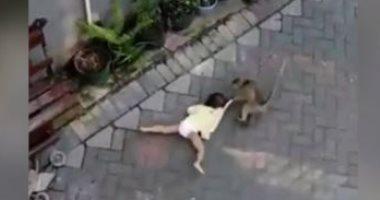 مش هتصدق عمل إيه.. قرد يحاول خطف طفلة فى إندونيسيا.. فيديو