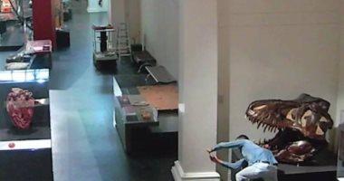 بيروق مزاجه.. استرالى يلتقط سيلفى مع جمجمة ديناصور فى متحف مغلق.. فيديو