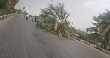 سقوط أشجار على طريق القاهر أسيوط الزراعى بسبب سوء الأحوال الجوية