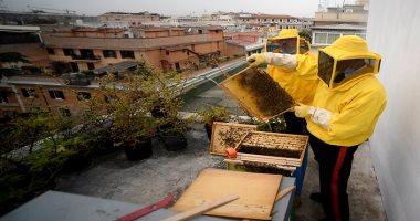 """كورونا يمنح النحل فى روما """"الصحة والعافية"""".. اعرف القصة إيه"""