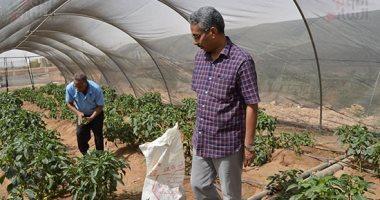 الزراعة: لجان مرورية على صوب الخضار ومنح تراخيص المشاتل لزيادة الإنتاج