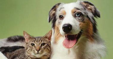 ليست الخفافيش وحدها.. القطط والكلاب ضمن حيوانات نقلت أوبئة للإنسان