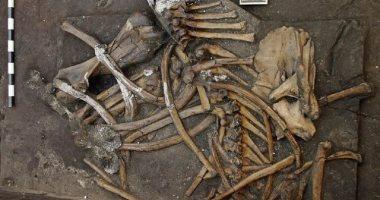 العثور على هيكل عظمي لفيل عمره 300 ألف سنة فى ألمانيا (فيديو)
