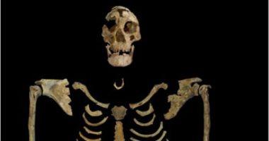 كنز التاريخ.. تعرف على أقدم الهياكل العظمية فى مصر قبل عرضها بمتحف الحضارة
