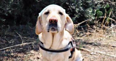 """ضبط المتهم بتعذيب كلب بـ""""بلكونة"""" منزله فى الإسكندرية"""
