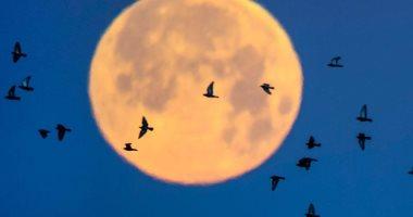 """""""قمر الفراولة"""" يظهر بالسماء يوم الجمعة المقبل.. اعرف أصل تسميته"""