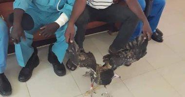 صحيفة سودانية: القبض على صقر إسرائيلي يحمل جهاز استكشاف خطير