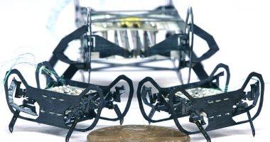 """تطوير روبوت مستوحى من """"الصرصار"""" بحجم صغير وسرعة عالية .. صور"""