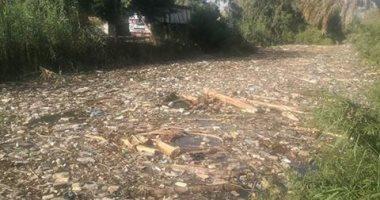 شكوى من تراكم القمامة والحيوانات النافقة بترعة قرية دندره بقنا