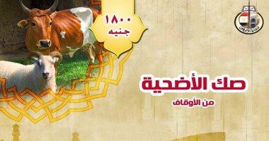 الأوقاف: القاهرة تتصدر المديريات فى مبيعات صكوك الأضاحى بـ 3 مليون جنيه