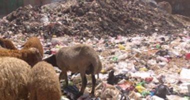 شكوى من انتشار تراكمات القمامة فى أرص البويات بشبرا الخيمة
