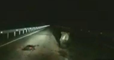 الضنا غالى.. دب يتعدى على سيارة لحماية ابنه أثناء عبور طريق سريع