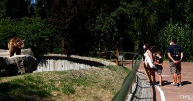 حديقة حيوان مدريد تفتح أبوابها أمام الزائرين بعق تخفيف إجراءات كورونا.. صور