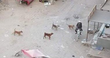 أهالى مساكن التبين يشكون انتشار الكلاب الضالة للاهالى بالمنطقة