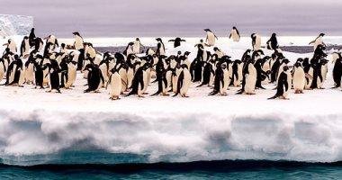 تزايد بطاريق القطب الجنوبى بسبب الاحتباس العالمى