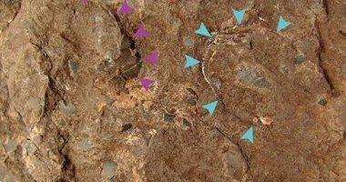 العثور على أصغر بيضة ديناصور متحجرة عمرها 110 ملايين سنة فى اليابان