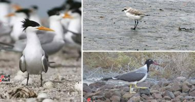 نفوق 4 طيور فى إسبانيا بسبب أنفلونزا الطيور.. و1116 حالة تفشى فى أوروبا