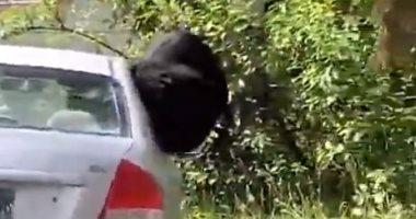 """""""مزاجه رايق"""" دب ضخم يقفز من شباك سيارة سيدة أمريكية ليلعب داخلها.. فيديو"""