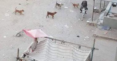 شكوى من انتشار الكلاب الضالة فى حى التبين بحلوان