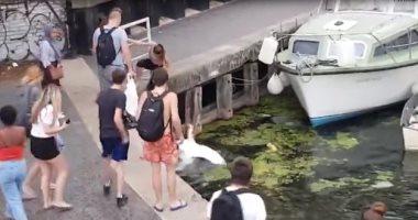 """الشرطة البريطانية تبحث عن فتاة ركلت """"بجعة"""" فى بحيرة.. فيديو وصور"""