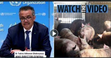 مدير الصحة العالمية يحذر: السلالة الجديدة لأنفلونزا الخنازير تنتقل للبشر