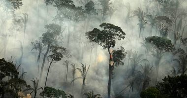 هوس بريطانيا بالأخشاب والجلود يؤثر بشكل كبير على حرائق الأمازون