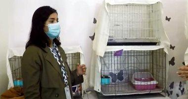 السعودية نيوز |                                              السعودية: فرق تطوعية لإنقاذ القطط الأليفة المفقودة بشوارع الرياض