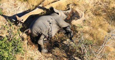 ديلى ميل: فيروس غامض يقتل 400 فيلاً ببتسوانا و مخاوف انتقاله للبشر.. فيديو