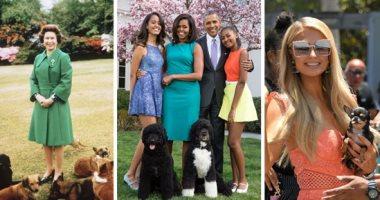 حب من نوع خاص.. تعرف على أهم فصائل الكلاب التى يمتلكها النجوم والمشاهير