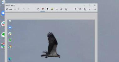 تعملها إزاى.. كيفية التقاط لقطات شاشة على كمبيوتر يعمل بنظام ويندوز