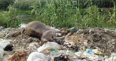 سيبها علينا ..قارئ يشكو من انتشار القمامة والحيوانات النافقة بطره دقهلية