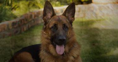 لجنة الأوبئة الأردنية تقلل من خطورة نقل الكلاب لكورونا إلى الإنسان