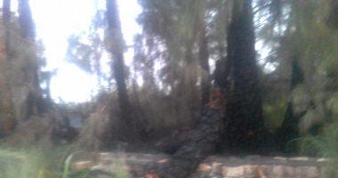 صور.. حريق يلتهم 20 فدان نخيل وأشجار بأسيوط