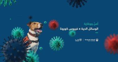 السعودية نيوز |                                              السعودية تستخدم كلاب مدربة للكشف عن مصابى كورونا فى المنافذ الجمركية