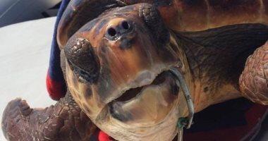 إنقاذ السلحفاة شارلوت من خطاف صنارة على سواحل إيطاليا.. صور