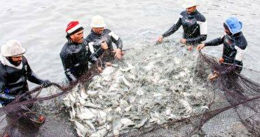 أسامة ربيع: مشروع الاستزراع السمكى بقناة السويس وفر فرص عمل عديدة.. فيديو