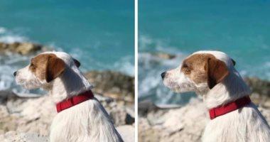 """مكافأة 15 ألف جنيه على تويتر للعثور على كلب تائه بـ""""طوق أحمر"""""""