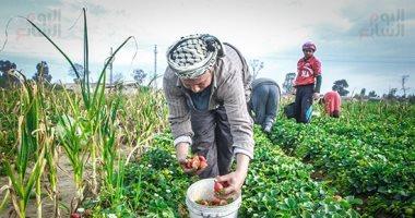 صورة اليوم.. قرب الحصاد تُشد فى الناس الهمم
